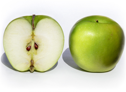 criando-labrador-frutas-e-vegetais-proibidos-cachorros-galho-semente-maca