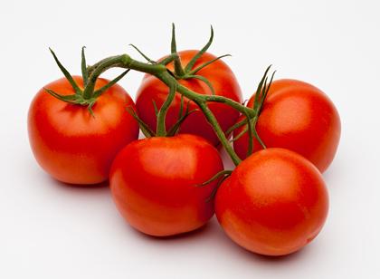 criando-labrador-frutas-e-vegetais-proibidos-cachorros-galho-tomate