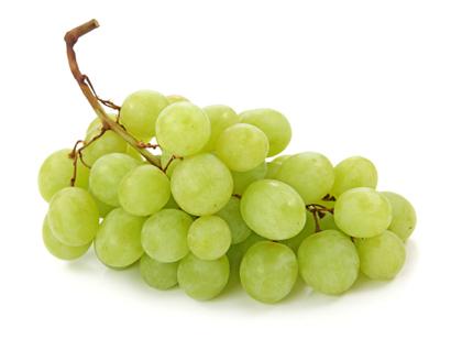 criando-labrador-frutas-e-vegetais-proibidos-cachorros-uva