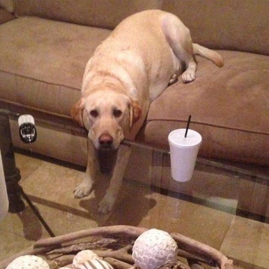 lazy-labrador-sofa-table